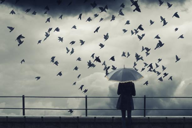 vrouw met paraplu kijken vogels vliegen - vogel herfst stockfoto's en -beelden
