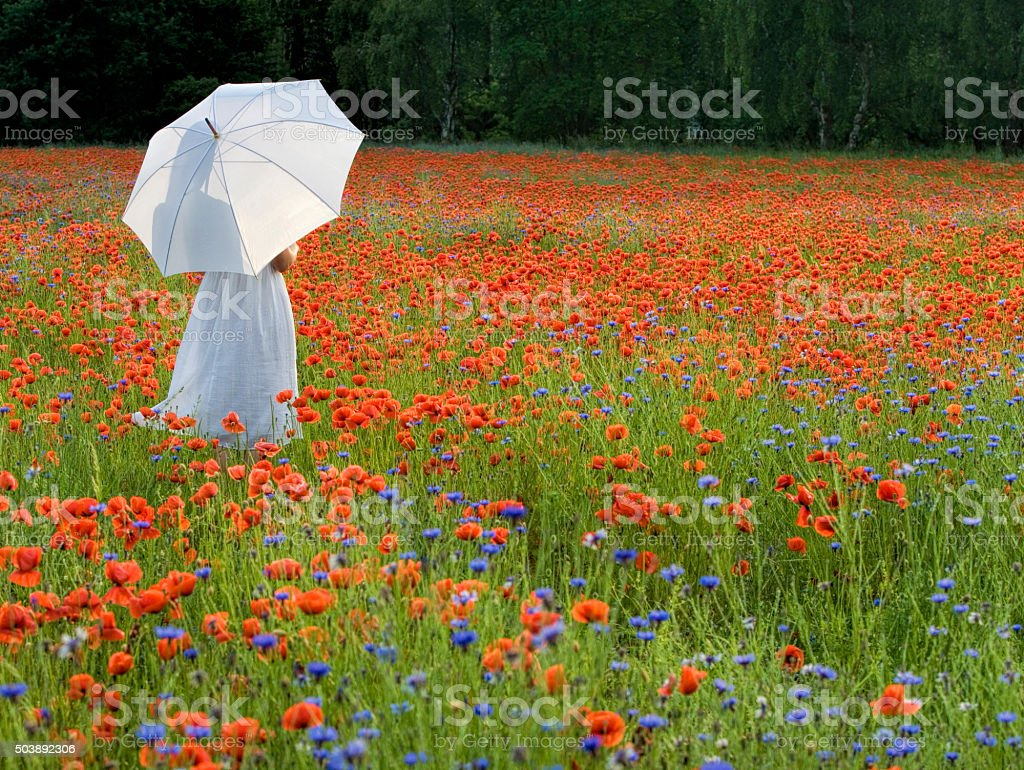 Woman with White Umbrella Standing in Poppy Field stock photo