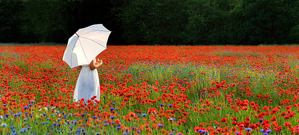 woman with white umbrella standing in poppy field - impressionist painting stock photos and pictures