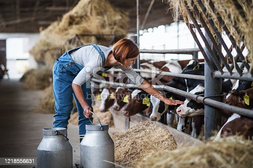 istock Woman worker with cans working on diary farm, agriculture industry. 1218556631