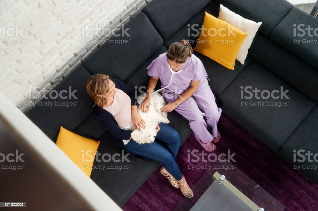 Woman Working As Veterinary Visiting Dog During House Call stock photo
