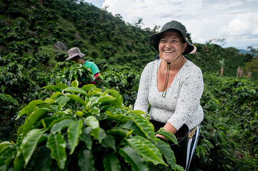 Very happy woman working at Colombian coffee farm collecting beans and smiling