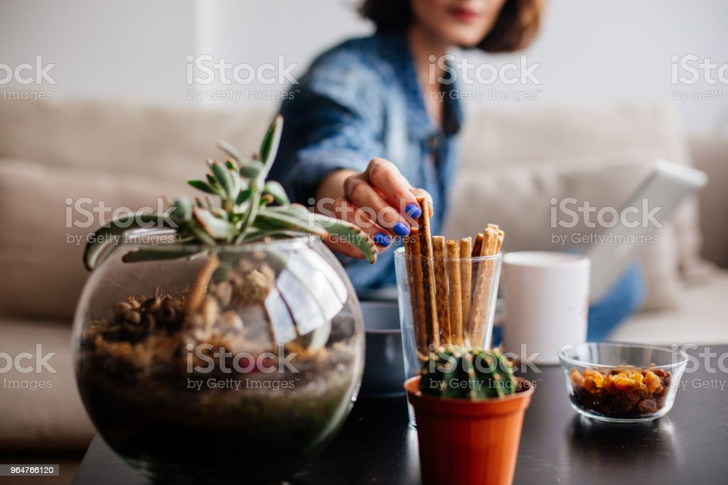 Woman working at home and eating cracker royalty-free stock photo
