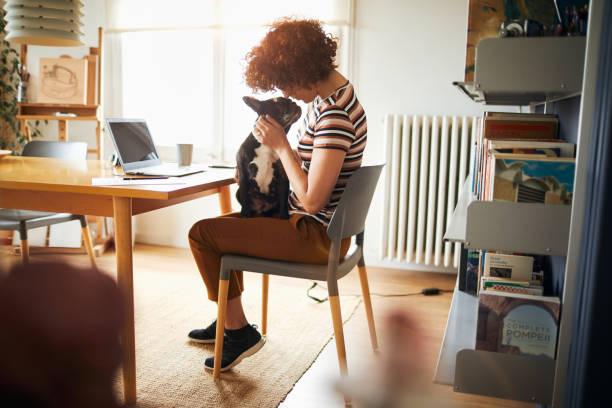 ev mali yapıyor evde çalışan kadın. - evde beslenen hayvan stok fotoğraflar ve resimler