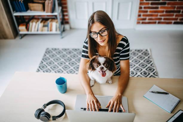 mujer trabajando desde casa - mascota fotografías e imágenes de stock