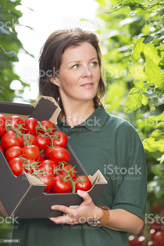 Woman working in a glasshouse, showing box with organic tomato royalty-free stock photo