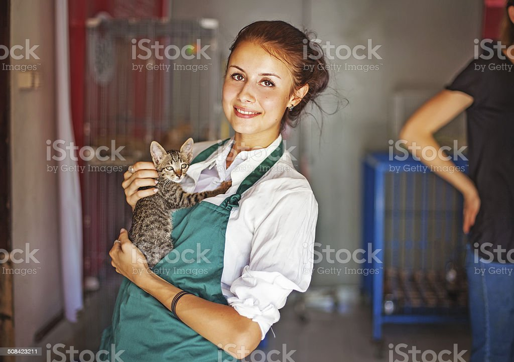 woman working in cats shelter stock photo