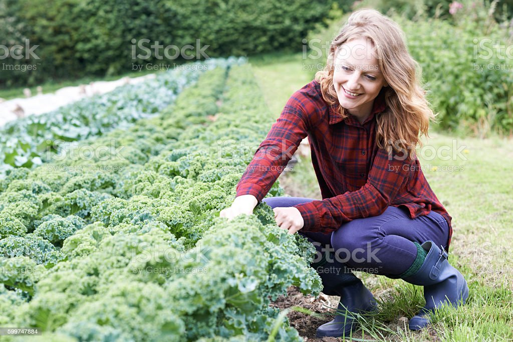Woman Working In Field On Organic Farm - foto de stock
