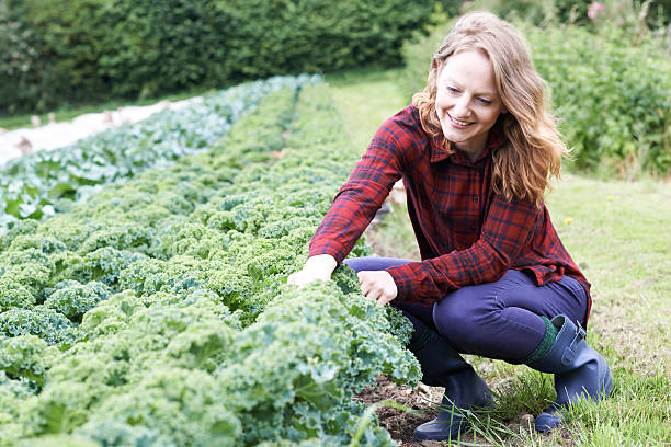woman working in field on organic farm - organic farm stock photos and pictures