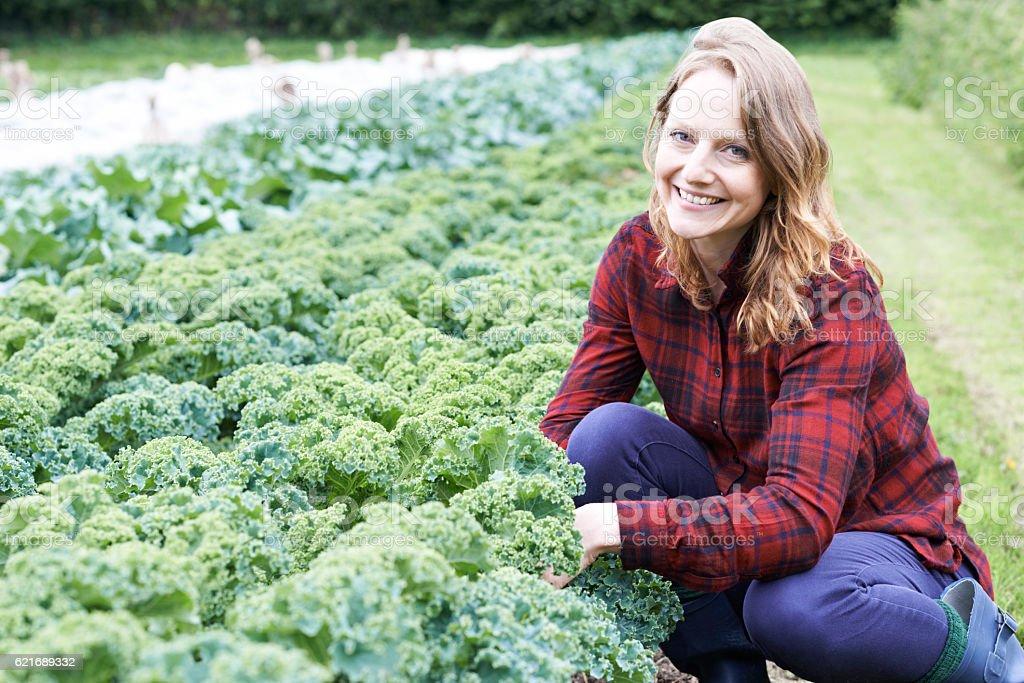 Femme travaillant dans le champ sur l'agriculture biologique - Photo