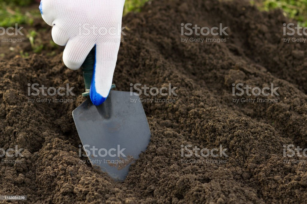 Close up of gardener\'s gloved hand planting with a small shovel on...