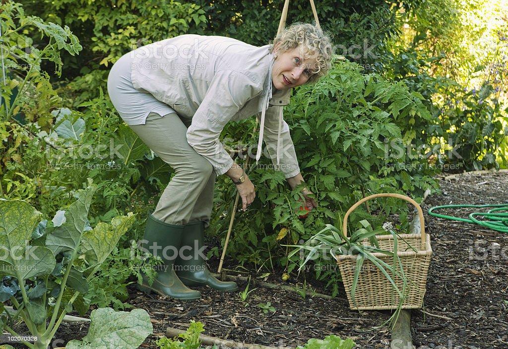Woman working in vegetable garden stock photo