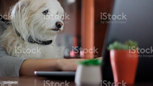 Woman working on computer with sweet dog on her lap picture id1224458434?b=1&k=6&m=1224458434&s=612x612&h=ycg2dlbkf8ghttvkznwcdywxitzfhpelsa3uofeamvs=