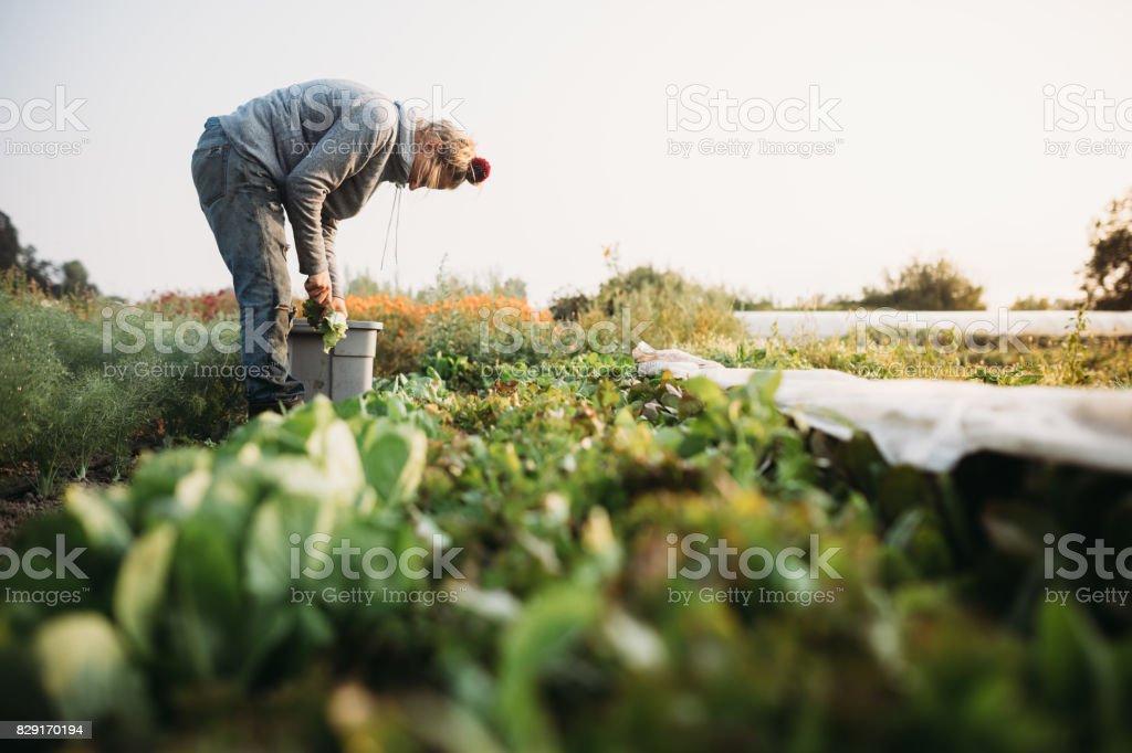 Femme travaillant sur la ferme - Photo