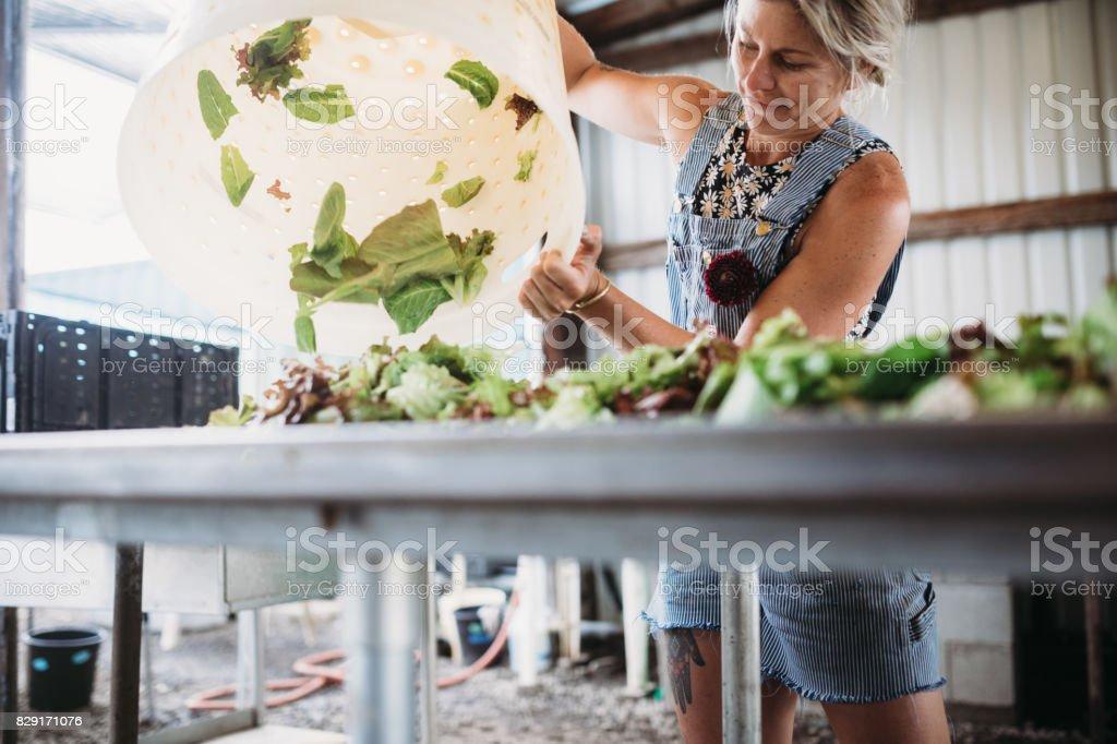 Woman Working on Farm stock photo