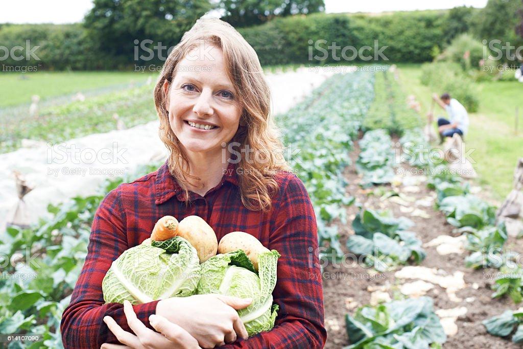 Woman Working On Organic Farm Holding Produce - Photo