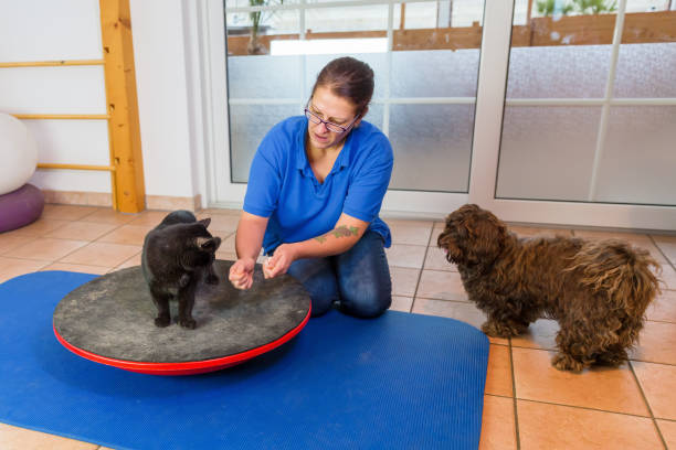 woman works with a cat and a dog in an animal physiotherapy office stock photo