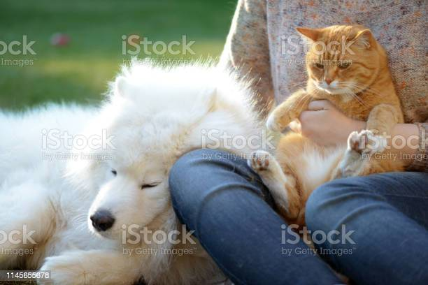 Womandog and cat picture id1145655678?b=1&k=6&m=1145655678&s=612x612&h=hgy7oxzptp559doe1kos0sixt2qf5ivhyutob5rt p0=