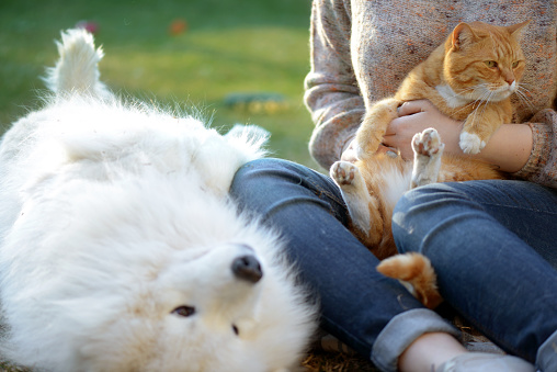 woman, dog and cat