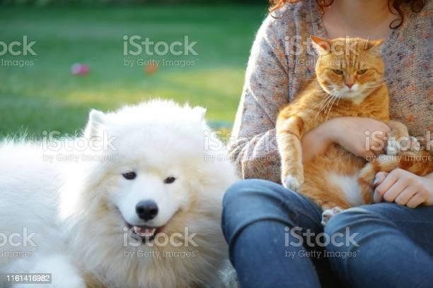 Womandog and cat picture id1161416982?b=1&k=6&m=1161416982&s=612x612&h=hz9ycd5a7h8ebyucff1tphguxlapnu2widcxsma pso=