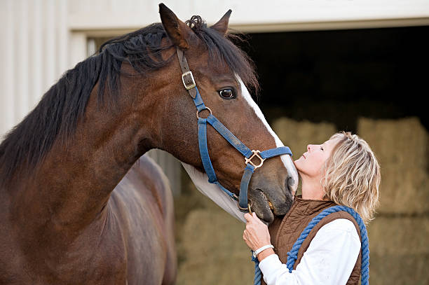 Woman's and Horse's Faces Together stock photo