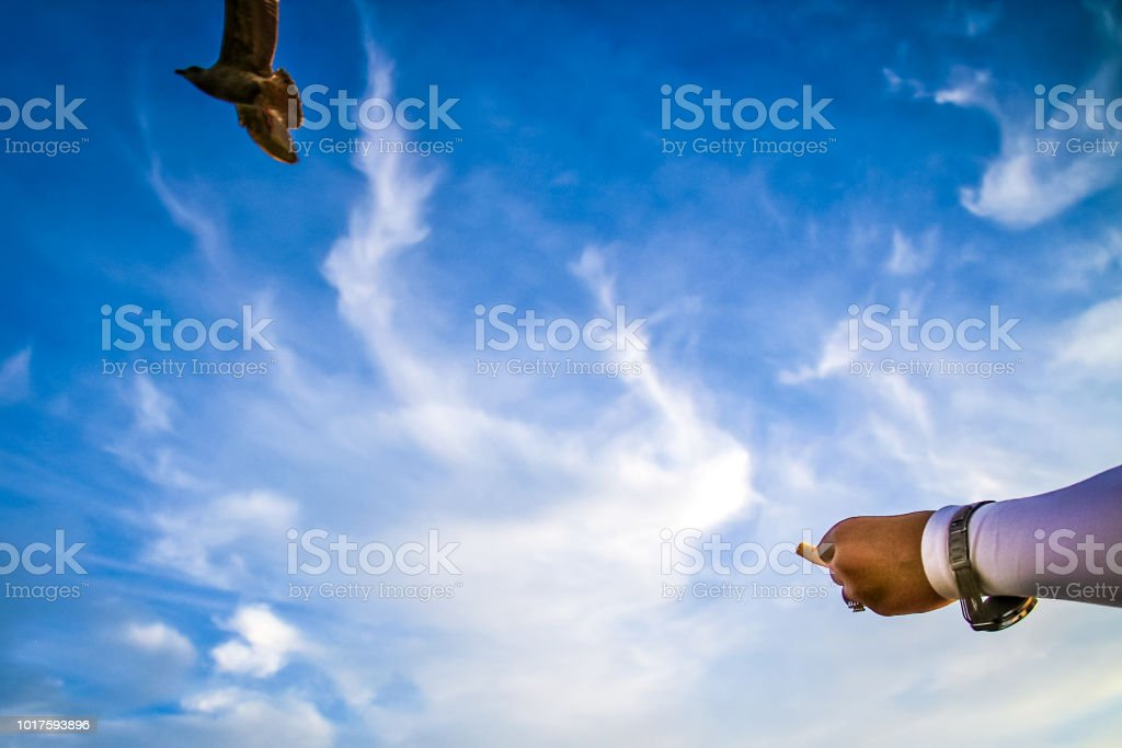 A Womans Arm Reaching Out To Feed A Chip To A Seagull In Front Of A