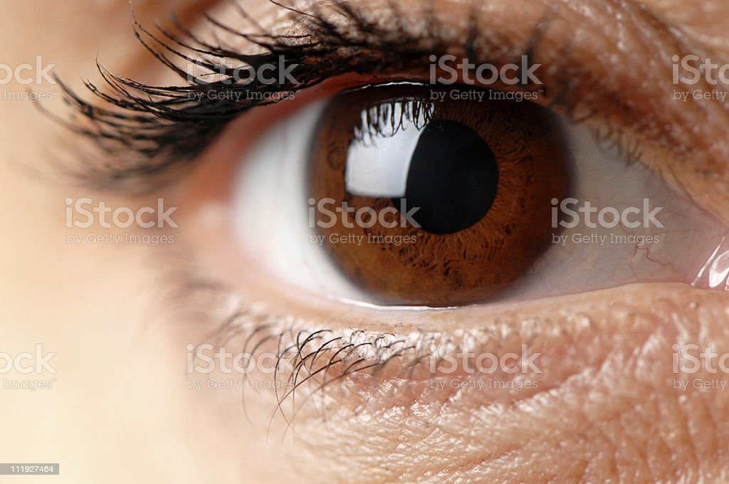 Woman's Brown Eye Close Up stock photo