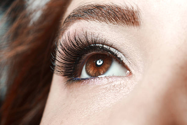 woman's brown eye close up of beautiful woman's eye with long lashes false eyelash stock pictures, royalty-free photos & images