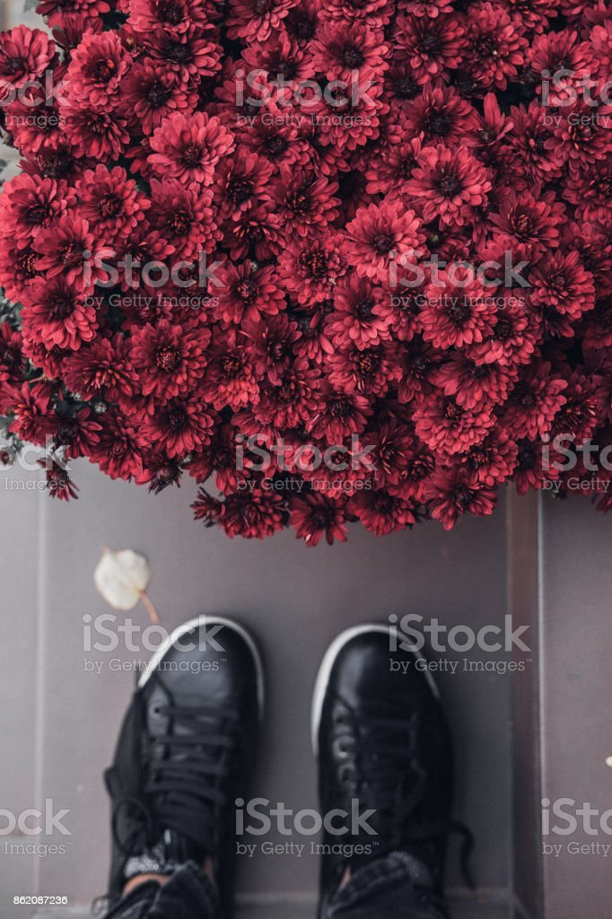 Woman's feet and bouquet of fall red flowers stock photo