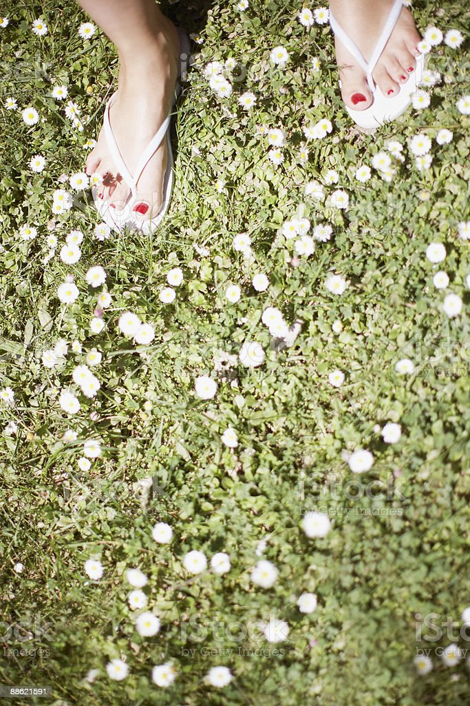 Womans feet on flowered grass royalty-free stock photo