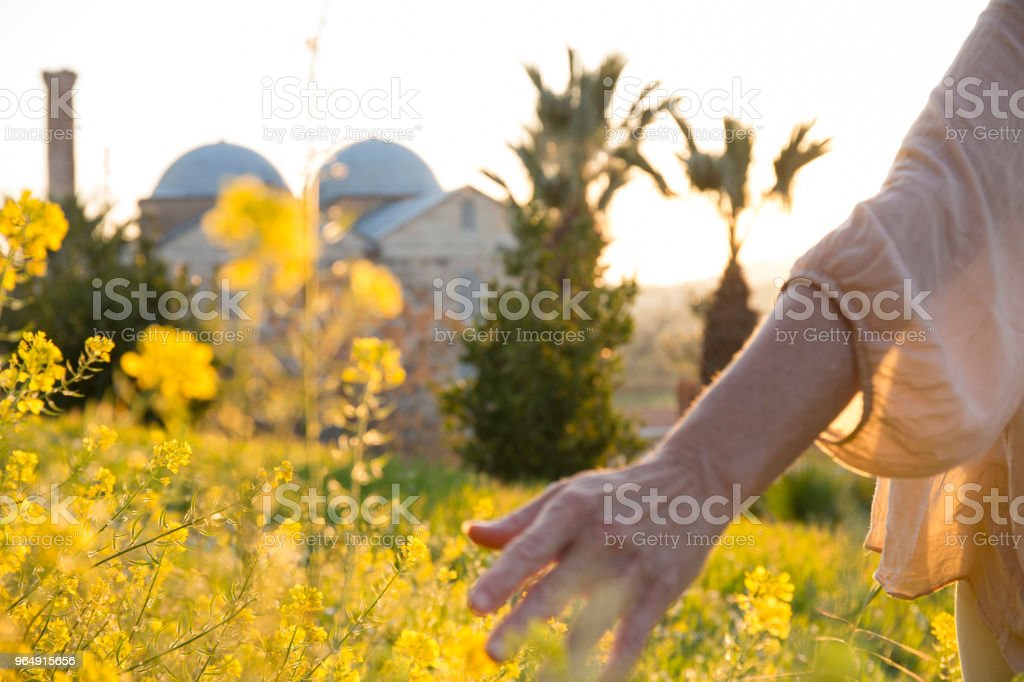 Woman's hand brushes flower on hillside royalty-free stock photo