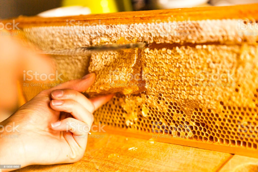 Woman's hand cutting honeycomb from wooden frame stock photo