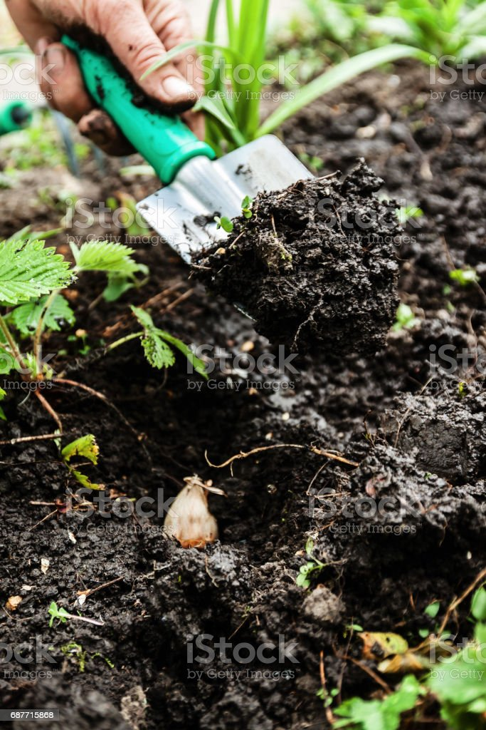A woman's hand digs soil and soil with a shovel. Close-up, Concept of gardening, gardening stock photo