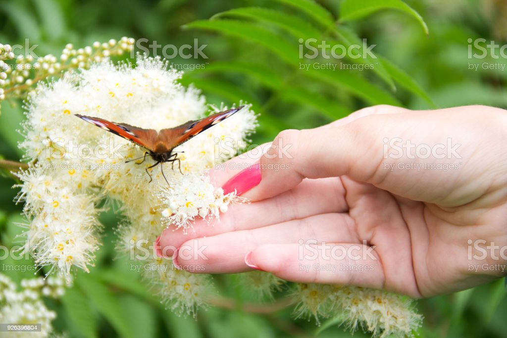 Woman's hand holding a flower with butterfly stock photo