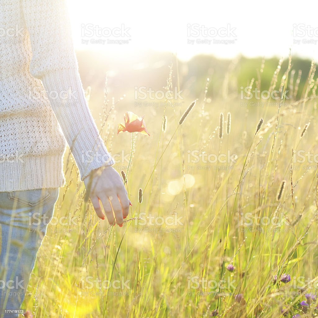 Woman's hand holding a poppy stock photo