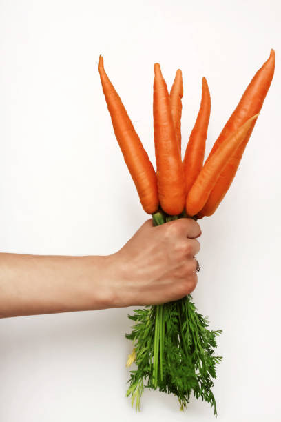 woman's hand holding bunch of whole fresh organic orange carrots on white background - icon set healthy foto e immagini stock