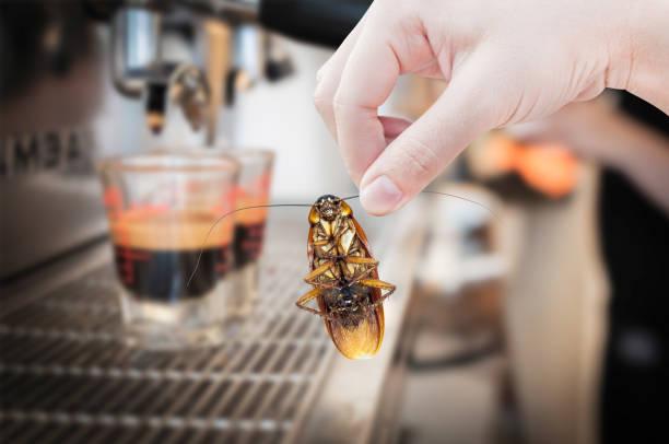 kvinnans hand innehav kackerlacka på kaffe maskinen fräsch bakgrund, eliminera kackerlacka i kafé - coffe with death bildbanksfoton och bilder