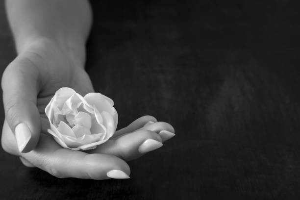 Woman's hand holding fresh, white rose on the dark background. Condolence card. Empty place for emotional, sentimental text or quote. Black and white photography. Woman's hand holding fresh, white rose on the dark background. Condolence card. Empty place for emotional, sentimental text or quote. Black and white photography. sentimentality stock pictures, royalty-free photos & images