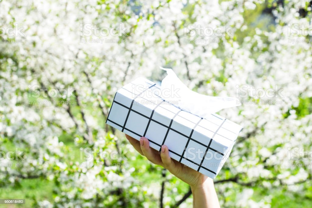 A woman's hand holds a black and white box with napkins against the blossoming spring tree. Allergy to blooming concept stock photo