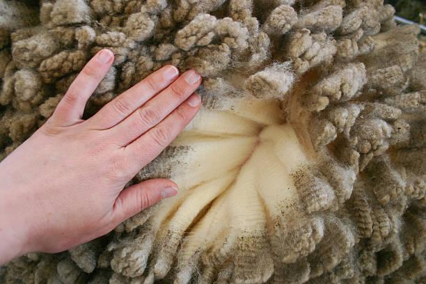 woman's hand über merinowolle - schichthaare stock-fotos und bilder