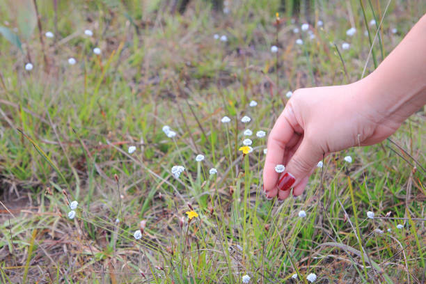 woman's hand touching grass and flower with her hand