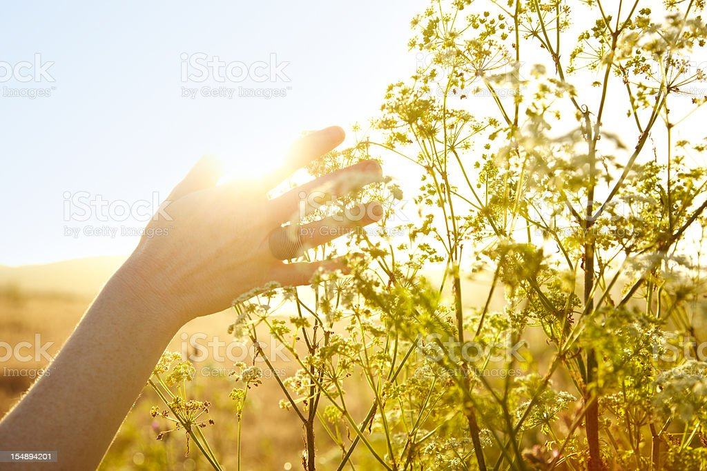 Woman's hand touching plant in nature stock photo