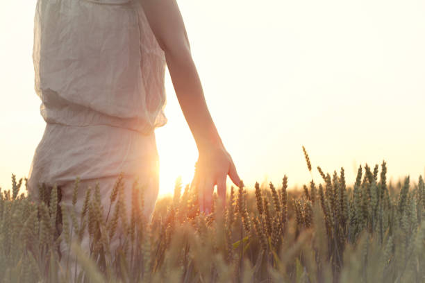woman's hand touching wheat ears at sunset - dieta macrobiotica foto e immagini stock