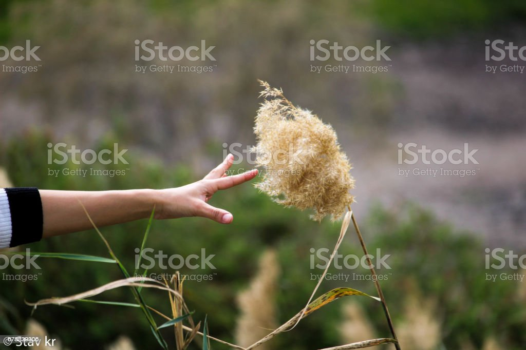 A woman's hand tries to reach a plant royalty-free stock photo