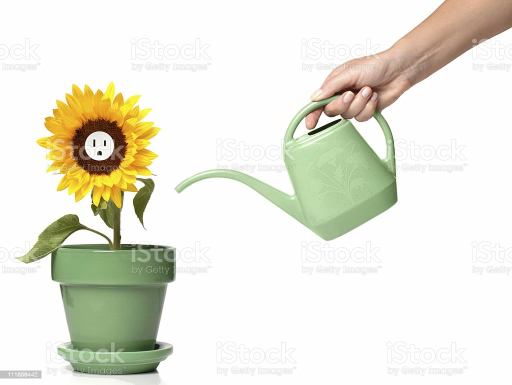 Woman's Hand Water Pot Watering Sunflower Electrical Socket on white royalty-free stock photo