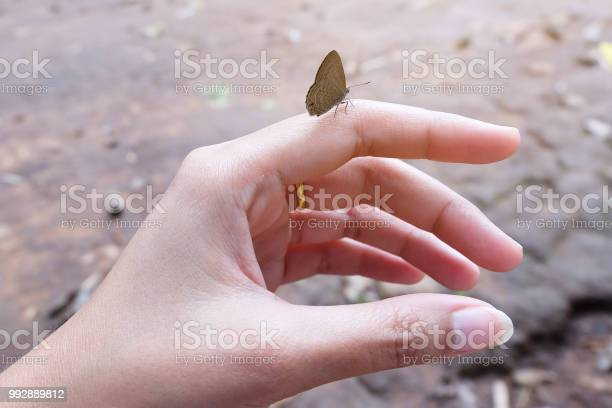 Womans hand with butterfly sitting on her finger picture id992889812?b=1&k=6&m=992889812&s=612x612&h=9jdsvrbww7wo6i1yvqgu0cdqwcphfz03au1i2eircdw=