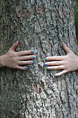Woman`s hands around tree trunk.