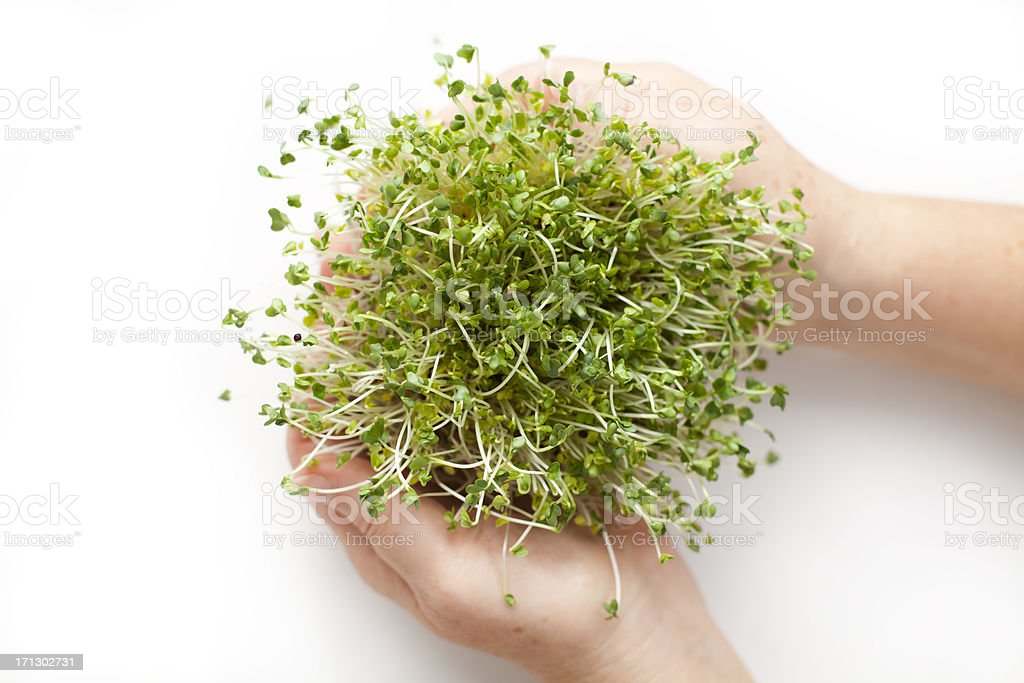 Woman's Hands Holding A Sprouts stock photo