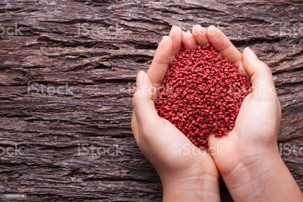 woman's hands holding achiote beans stock photo