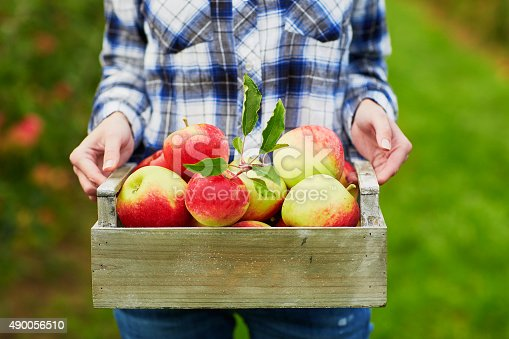 istock Woman's hands holding crate with red apples 490056510